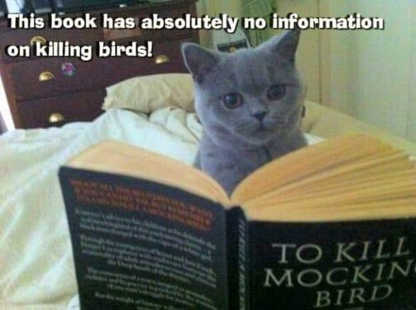 No information on killing birds